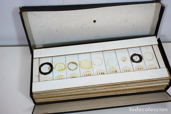 Antigüedades: MICROSCOPIO. COLECCIÓN DE 49 PREPARACIONES MICROSCÓPICAS c. 1900 - Foto 2 - 221938746