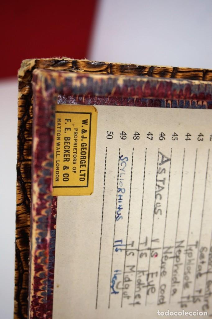 Antigüedades: ANTIGUA CAJA PARA PREPARACIONES MICROSCOPICAS c.1900 - Foto 7 - 221944628