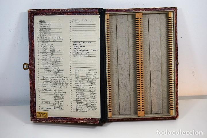 Antigüedades: ANTIGUA CAJA PARA PREPARACIONES MICROSCOPICAS c.1900 - Foto 8 - 221944628