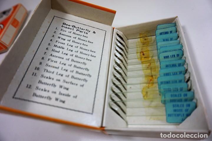 Antigüedades: MICROSCOPIO. COLECCIÓN VINTAGE DE 60 PREPARACIONES MICROSCÓPICAS c.1950 - Foto 2 - 222680448