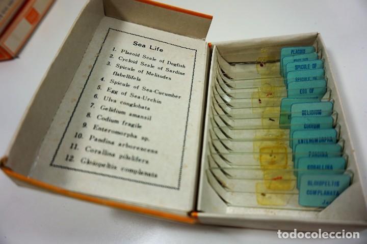 Antigüedades: MICROSCOPIO. COLECCIÓN VINTAGE DE 60 PREPARACIONES MICROSCÓPICAS c.1950 - Foto 3 - 222680448