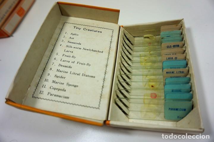 Antigüedades: MICROSCOPIO. COLECCIÓN VINTAGE DE 60 PREPARACIONES MICROSCÓPICAS c.1950 - Foto 4 - 222680448