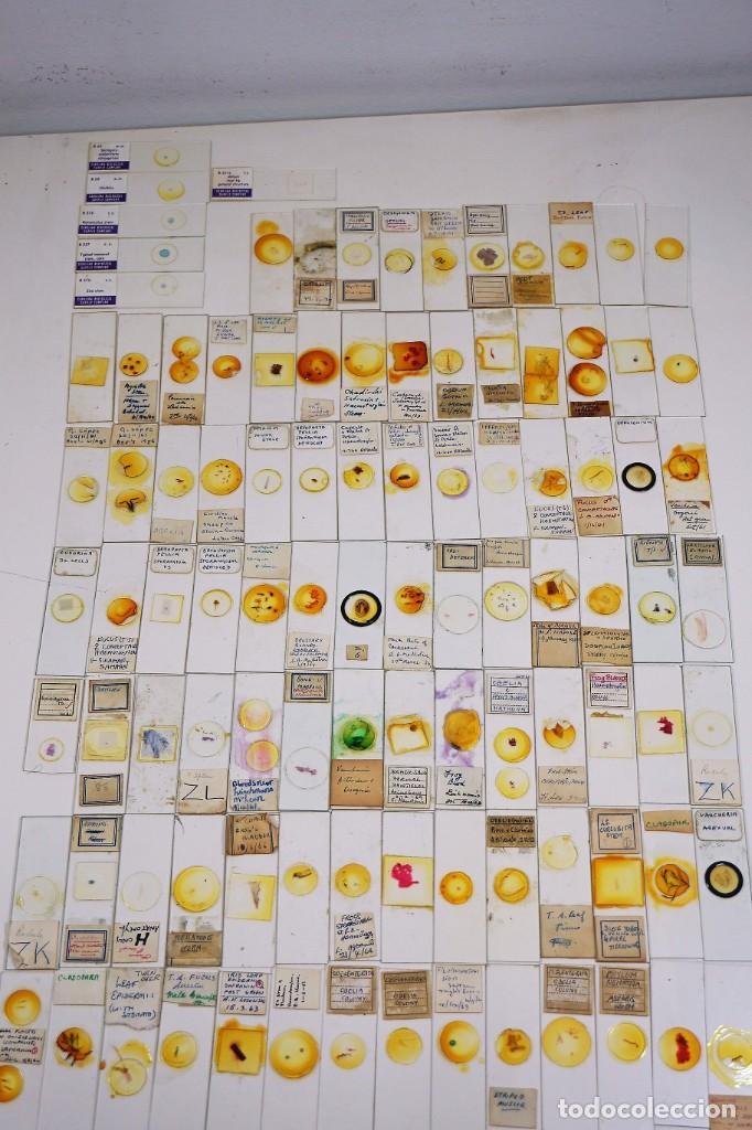 MICROSCOPIO. COLECCIÓN DE 100 PREPARACIONES MICROSCÓPICAS C.1950 (Antigüedades - Técnicas - Instrumentos Ópticos - Microscopios Antiguos)