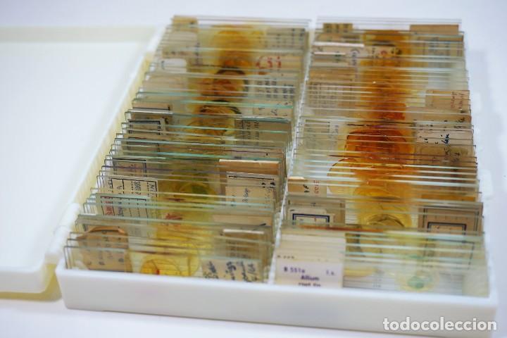 Antigüedades: MICROSCOPIO. COLECCIÓN DE 100 PREPARACIONES MICROSCÓPICAS c.1950 - Foto 2 - 222680741