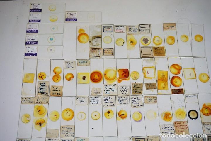 Antigüedades: MICROSCOPIO. COLECCIÓN DE 100 PREPARACIONES MICROSCÓPICAS c.1950 - Foto 3 - 222680741
