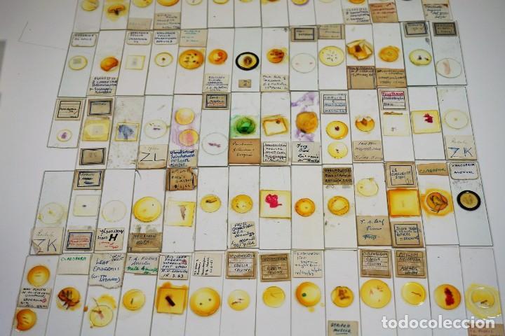 Antigüedades: MICROSCOPIO. COLECCIÓN DE 100 PREPARACIONES MICROSCÓPICAS c.1950 - Foto 4 - 222680741