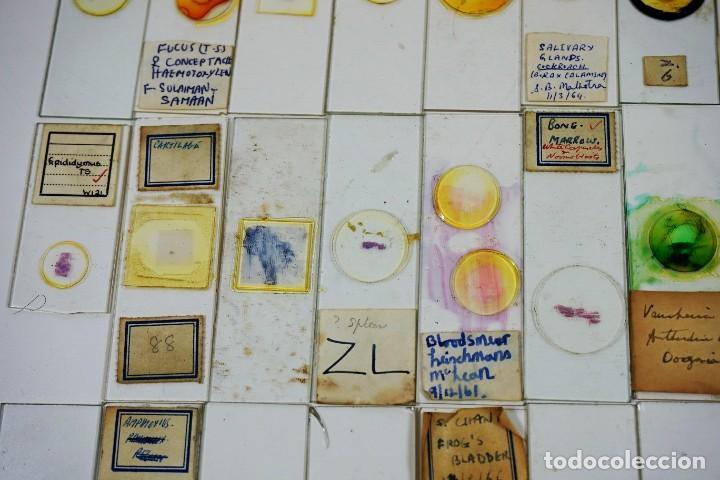 Antigüedades: MICROSCOPIO. COLECCIÓN DE 100 PREPARACIONES MICROSCÓPICAS c.1950 - Foto 7 - 222680741