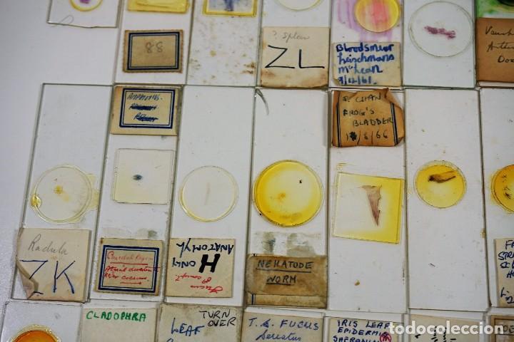 Antigüedades: MICROSCOPIO. COLECCIÓN DE 100 PREPARACIONES MICROSCÓPICAS c.1950 - Foto 12 - 222680741