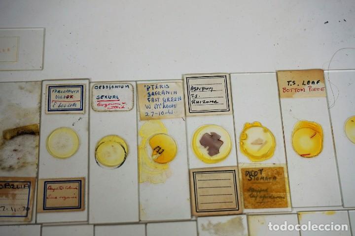 Antigüedades: MICROSCOPIO. COLECCIÓN DE 100 PREPARACIONES MICROSCÓPICAS c.1950 - Foto 18 - 222680741