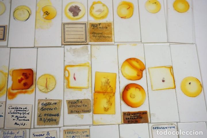 Antigüedades: MICROSCOPIO. COLECCIÓN DE 100 PREPARACIONES MICROSCÓPICAS c.1950 - Foto 19 - 222680741