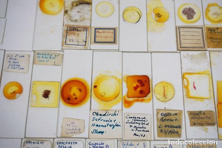 Antigüedades: MICROSCOPIO. COLECCIÓN DE 100 PREPARACIONES MICROSCÓPICAS c.1950 - Foto 20 - 222680741
