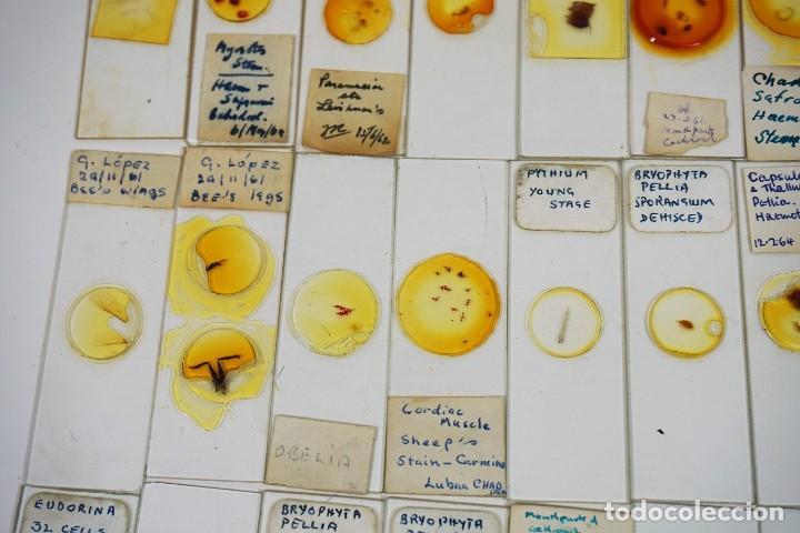 Antigüedades: MICROSCOPIO. COLECCIÓN DE 100 PREPARACIONES MICROSCÓPICAS c.1950 - Foto 22 - 222680741