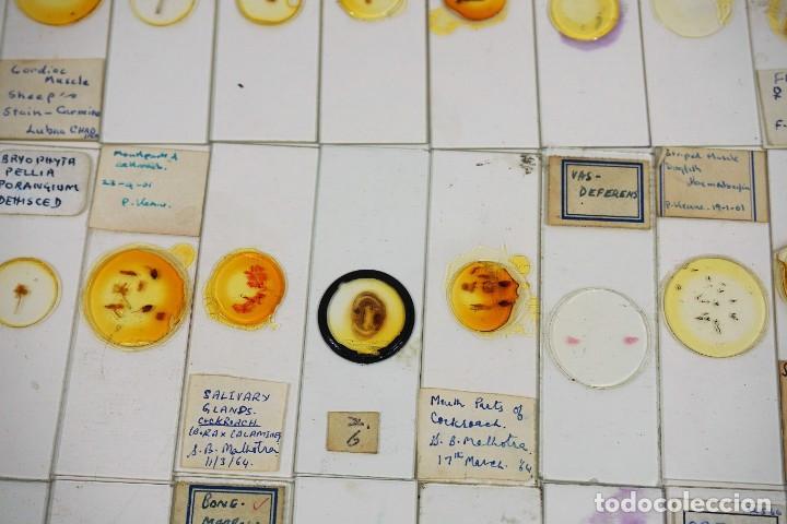 Antigüedades: MICROSCOPIO. COLECCIÓN DE 100 PREPARACIONES MICROSCÓPICAS c.1950 - Foto 26 - 222680741