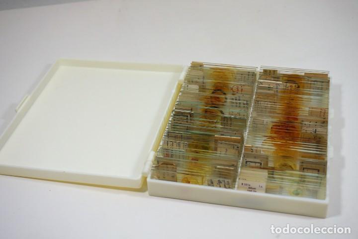 Antigüedades: MICROSCOPIO. COLECCIÓN DE 100 PREPARACIONES MICROSCÓPICAS c.1950 - Foto 28 - 222680741