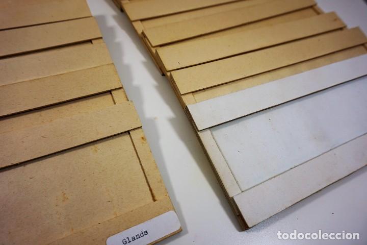 Antigüedades: MICROSCOPIO. ANTIGUA CAJA PARA PREPARACIONES MICROSCOPICAS c.1900 - Foto 4 - 222681400