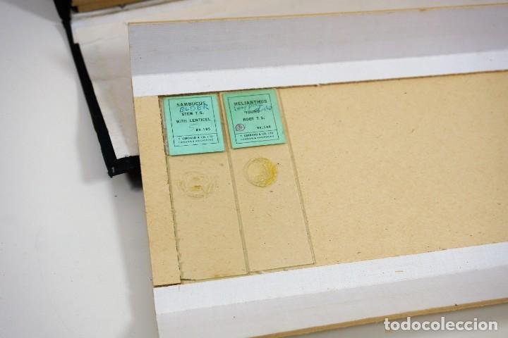 Antigüedades: MICROSCOPIO. ANTIGUA CAJA PARA PREPARACIONES MICROSCOPICAS c.1900 - Foto 6 - 222681400