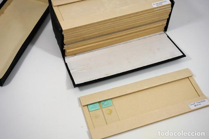 Antigüedades: MICROSCOPIO. ANTIGUA CAJA PARA PREPARACIONES MICROSCOPICAS c.1900 - Foto 7 - 222681400
