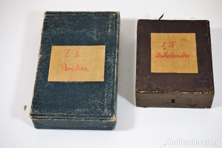 Antigüedades: MICROSCOPIO. ANTIGUAS CAJAS CON PREPARACIONES DE ORIGEN ALEMÁN c.1920 - Foto 2 - 222807758