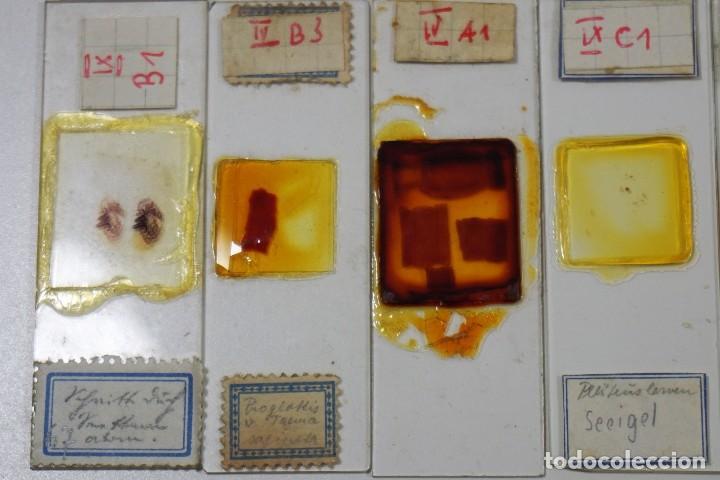Antigüedades: MICROSCOPIO. ANTIGUAS CAJAS CON PREPARACIONES DE ORIGEN ALEMÁN c.1920 - Foto 6 - 222807758