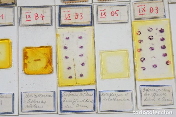 Antigüedades: MICROSCOPIO. ANTIGUAS CAJAS CON PREPARACIONES DE ORIGEN ALEMÁN c.1920 - Foto 7 - 222807758