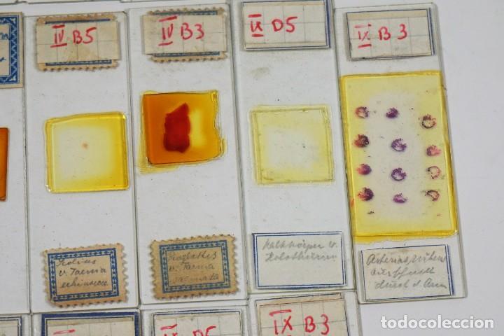 Antigüedades: MICROSCOPIO. ANTIGUAS CAJAS CON PREPARACIONES DE ORIGEN ALEMÁN c.1920 - Foto 9 - 222807758