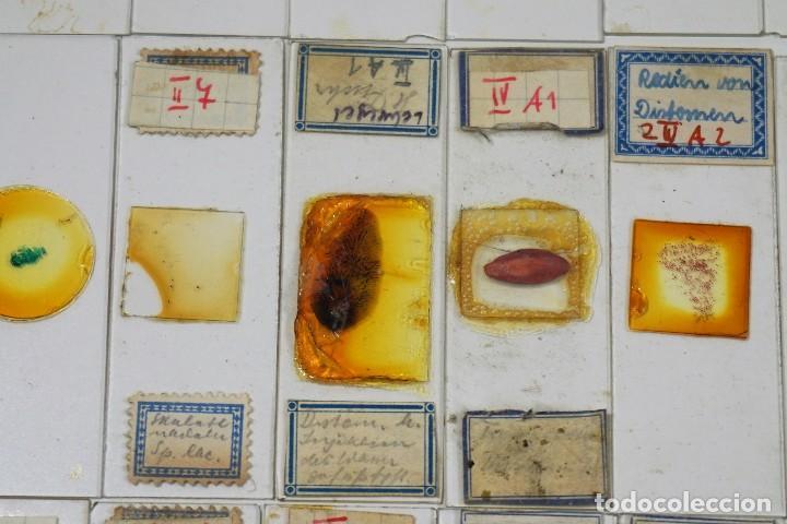 Antigüedades: MICROSCOPIO. ANTIGUAS CAJAS CON PREPARACIONES DE ORIGEN ALEMÁN c.1920 - Foto 10 - 222807758