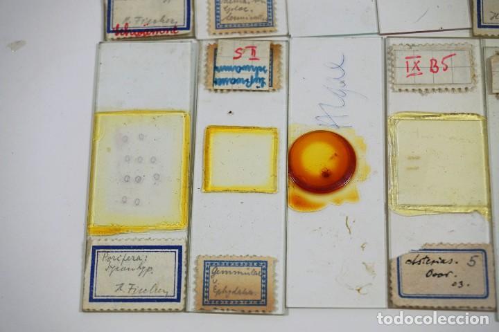Antigüedades: MICROSCOPIO. ANTIGUAS CAJAS CON PREPARACIONES DE ORIGEN ALEMÁN c.1920 - Foto 14 - 222807758