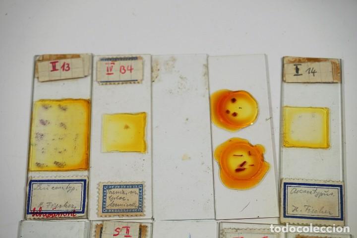 Antigüedades: MICROSCOPIO. ANTIGUAS CAJAS CON PREPARACIONES DE ORIGEN ALEMÁN c.1920 - Foto 15 - 222807758