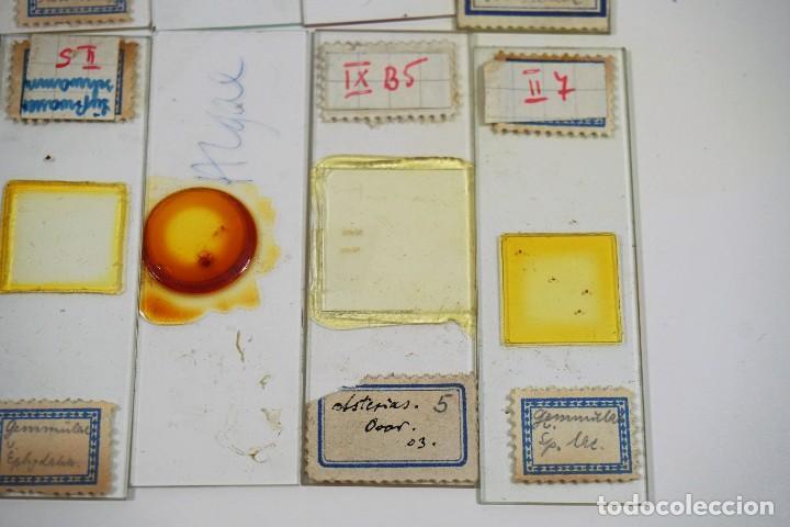 Antigüedades: MICROSCOPIO. ANTIGUAS CAJAS CON PREPARACIONES DE ORIGEN ALEMÁN c.1920 - Foto 16 - 222807758