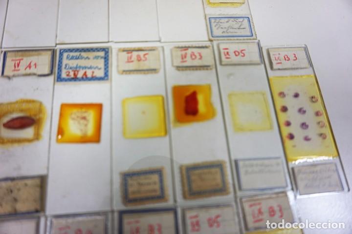 Antigüedades: MICROSCOPIO. ANTIGUAS CAJAS CON PREPARACIONES DE ORIGEN ALEMÁN c.1920 - Foto 21 - 222807758