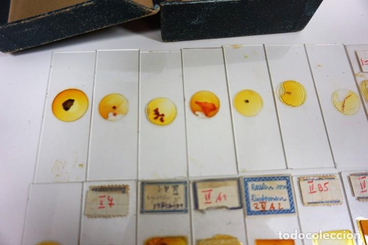 Antigüedades: MICROSCOPIO. ANTIGUAS CAJAS CON PREPARACIONES DE ORIGEN ALEMÁN c.1920 - Foto 23 - 222807758