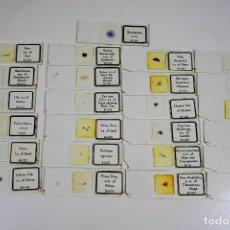 Antigüedades: MICROSCOPIO. COLECCIÓN DE 25 PREPARACIONES MICROSCÓPICAS DE BOTÁNICA C.1960 45 EUR. Lote 222808080