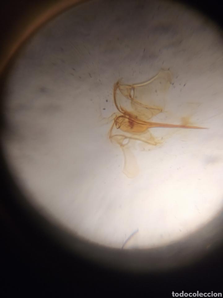 Antigüedades: Antiguo Microscopio de bolsillo - Foto 6 - 219491381