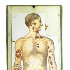 Antigüedades: 1890 - MODELO ANATÓMICO POP-UP DEL CUERPO HUMANO - MUY GRANDE - KELLOGG NEW YORK. Lote 234731435