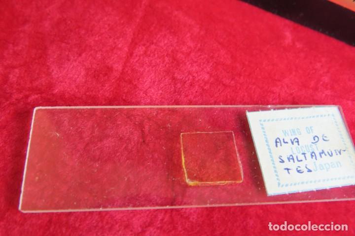 Antigüedades: MILBEN - 200 - TV TIPO MICROSCOPIO PROYECTOR - MADE JAPAN - Foto 11 - 264433104