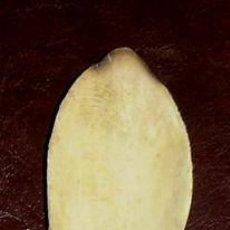 Antigüedades: CUCHARA ANTIGUA DE MADERA MEDIDA 22 CMS.. Lote 7616218