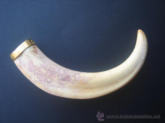 COLMILLO JABALÍ ANTIGUO CON ADEREZO EN ORO. 22 CMS DE LONGUITUD. (Antigüedades - Hogar y Decoración - Trofeos de Caza Antiguos)