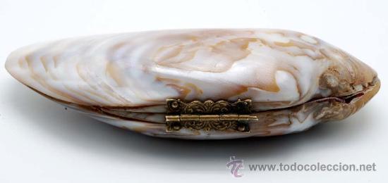 Antigüedades: Monedero concha con cierre bronce S XIX - Foto 3 - 28210258