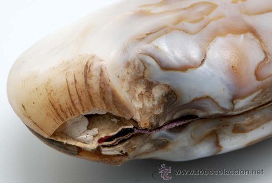 Antigüedades: Monedero concha con cierre bronce S XIX - Foto 4 - 28210258