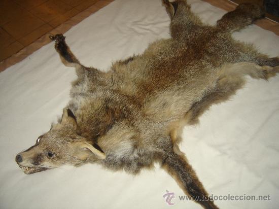Piel de zorro cabeza naturalizada a os 70 comprar for Trofeos caza decoracion