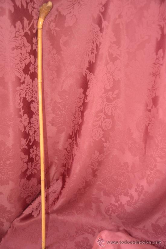 Antigüedades: precioso bastón de caña con cabeza de perro tallada en la raiz - Foto 11 - 39117738