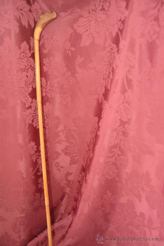 Antigüedades: precioso bastón de caña con cabeza de perro tallada en la raiz - Foto 5 - 39117738