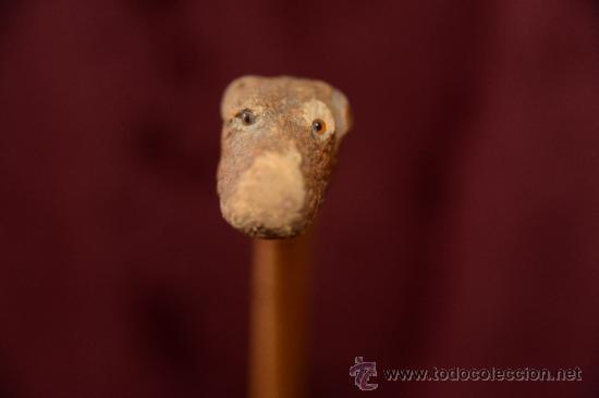 Antigüedades: precioso bastón de caña con cabeza de perro tallada en la raiz - Foto 6 - 39117738