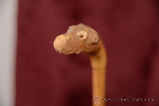 Antigüedades: precioso bastón de caña con cabeza de perro tallada en la raiz - Foto 8 - 39117738