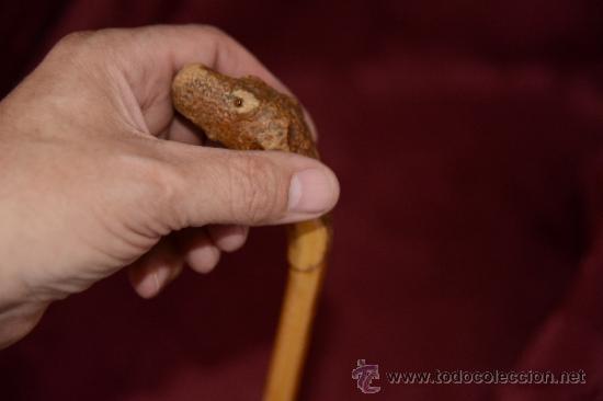 Antigüedades: precioso bastón de caña con cabeza de perro tallada en la raiz - Foto 7 - 39117738