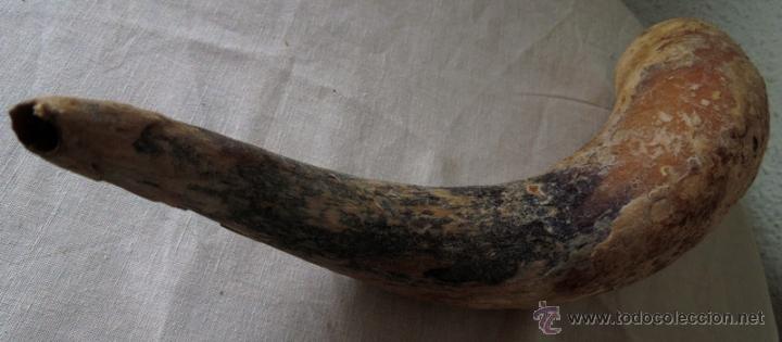 ANTIGUO CUERNO DE TORO (Antigüedades - Hogar y Decoración - Trofeos de Caza Antiguos)