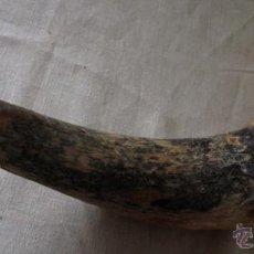Antigüedades: ANTIGUO CUERNO DE TORO. Lote 39814037