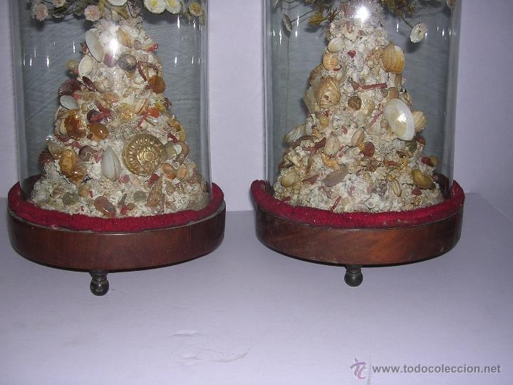 Antigüedades: PAREJA DE FANALES ANTIGUOS S.XIX CON SUS FLORES DE CONCHAS , DE CONSERVACION VER FOTGR. - Foto 5 - 39939117
