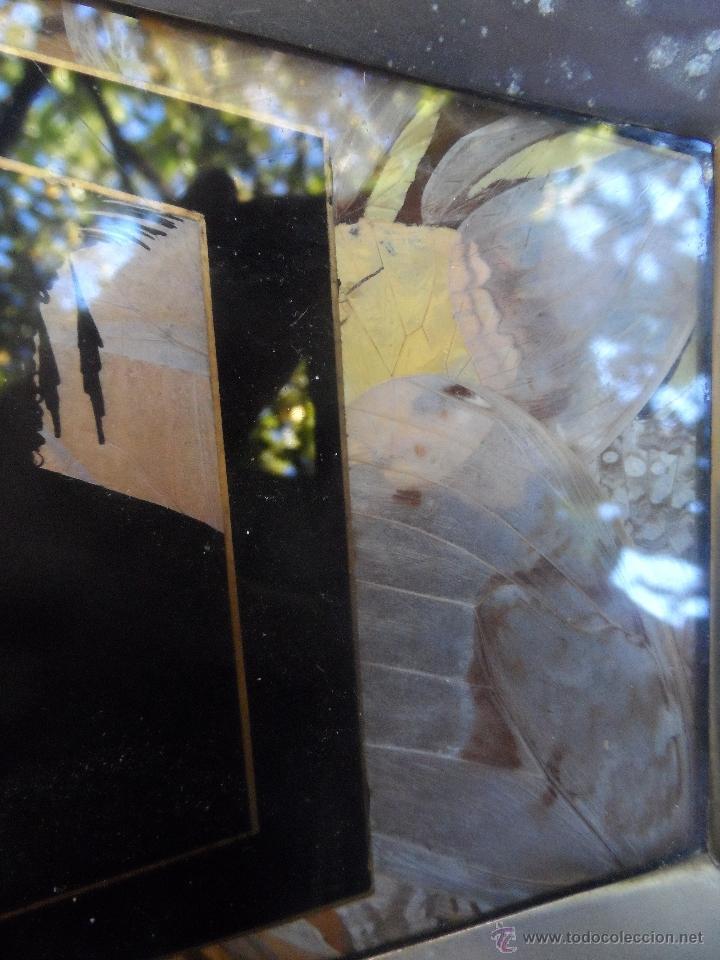 bandeja alas de mariposas cristal pintado marco - Comprar Bandejas ...
