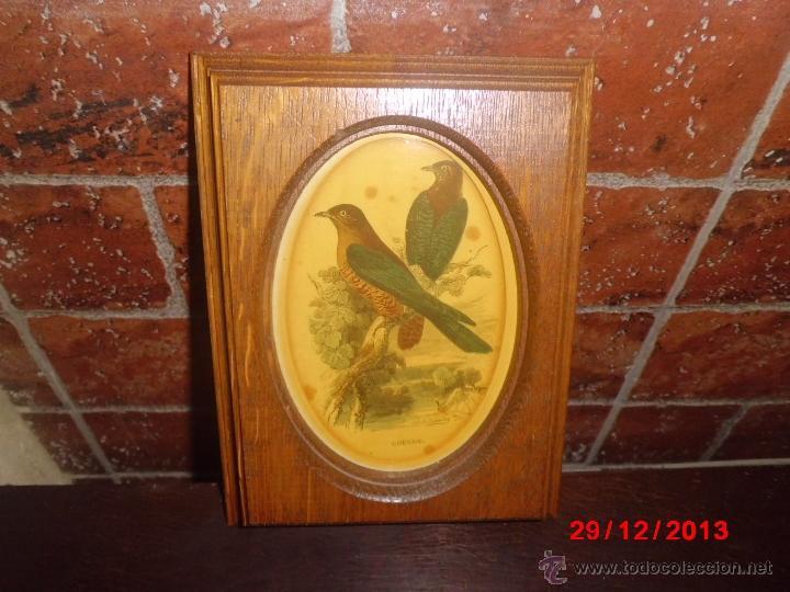 cuadro de un grabado de un pajaro con el marco - Comprar en ...